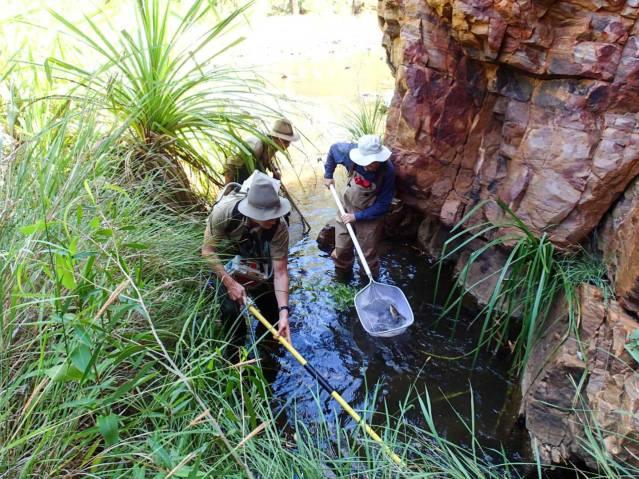 Australia-Freshwater-Fish