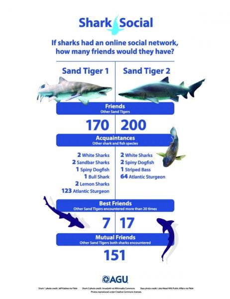 shark-social-networks